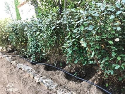 Plantation_Haie_Jardin_Saint-Raphael_SoGreen